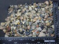 Australian opal rough Lighting Ridge mixed Knobby Gamble parcel 2000cts scoop #G