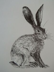 Original black pen & ink drawing of a hare in profile on ivory white paper
