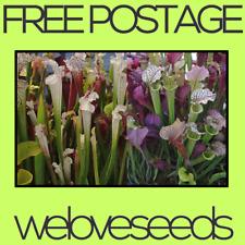 LOCAL AUSSIE STOCK - Pitcher Plant, Mixed Hybrid Sarracenia, Plant Seeds ~25x