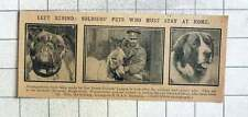 1915 Animals Hospital, Hugh Street, Westminster Look After Soldiers And Sailors