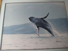 Large Humpback Whale Photograph Print W/ Wooden Frame Signed By Gary Younkerman