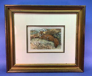 Hand Colored RECLINING FOX -W Austen Re-strike from original 19th c plate  #A14