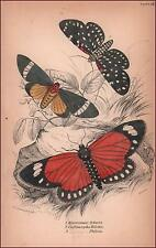 EXOTIC MOTHS, Hypercampa Sybaris, etc. hand colored engraving by Lizars 1843