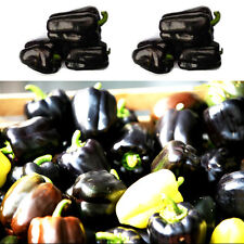 100Sweet Black Pepper Seeds Balcony Potted Organic Vegetable Seeds Chili Pepper