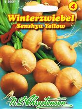 433311 Winterzwiebel ´Senshyu Yellow´  Zwiebel   Saatgut