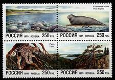 Naturschutz. Ostseeküste,Lappländische Tundra,Tiere u.a. Luchs. 4W. Rußland 1995