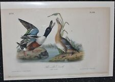 AUDUBON'S BIRDS of AMERICA - SHOVELLER DUCK -  First Edition Octavo Plate #394