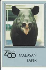 Malayan Tapir, a very rare animal, Milwaukee County zoo   Postcard