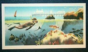 British Coastal Snorkelling    Superb Small Illustrated Colour Card