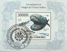 Timbre Faune marine Requins Comores BF249 o année 2009 lot 21396 - cote : 21 €