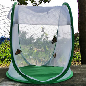 Butterfly Mantis Stick Small Insect Housing Enclosure Net Plant Breeding Cage AU