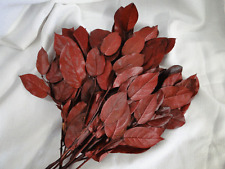 DRIED FLOWER BURGUNDY RED PRESERVED SALAL LEMON LEAF FLORAL FOLIAGE
