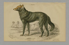 DUSKY WOLF HAND-COLORED PRINT JARDINE NATURALISTS LIBRARY 1875
