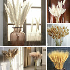 Artificial Natural Dried Pampas Grass Reed /Rabbit Tail Flower Bunch Home Decor