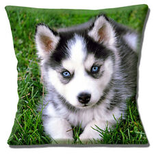 """Husky Puppy Dog Cushion Cover 16""""x16"""" 40cm Photo Print Cute Pup with Blue Eyes"""