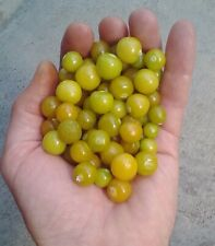 50, 100 or 150 seeds Physalis pubescens «Strawberry»