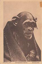 ALLEMAGNE GERMANY DEUTSCHLAND KOLN zoologischer garten schimpanse