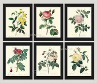Unframed Botanical Print Set of 6 Antique White Pink Roses Flowers Home Wall Art