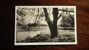 Cassiobury Park, Watford - old postcard (1955)