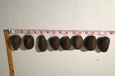 "8 Whole Dried Tagua Nut 2.25""-2.50"" Vegetable Ivory Netsuke Carve from Ecuador"