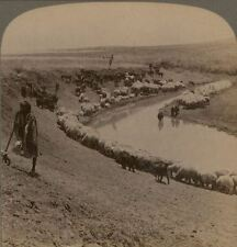Palestine By the Side of Still Waters. The Plain of Jezreel Underwood Stereoview