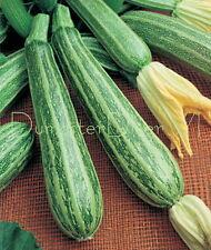 Cocozelle Italian Zucchini Heirloom Organic SQUASH 20 seeds productive NON-GMO