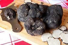250g schwarze Trüffel Frische. Tuber Uncinatum schwarze Edel Trüffel. Italien.