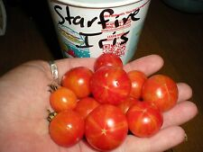 Starfire Iris Cherry Tomato! 20 Seeds! Comb S/H! See Our Store!