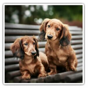 2 x Square Stickers 10 cm - Dachshund Puppies Sausage Dog Puppy Cool Gift #24345