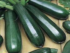 100 Black Beauty Zucchini Summer Squash Seeds - COMB S/H