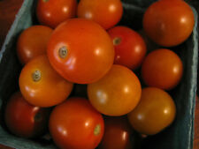 Tomato Orange Cherry  (lycopersicon esculentum) 20 Reliable Viable Seeds