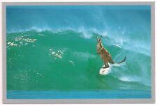 Continental Postcard Australia Kangaroo Surfing Surf's Up Marsupial Catch A Wave