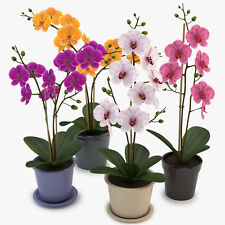 ORCHID FLOWER BOOSTER! Fantastic for all Type of Orchids!* FREE POSTAGE!!