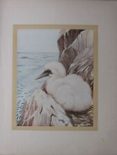 More details for beautiful baby bird print ~ the gannet
