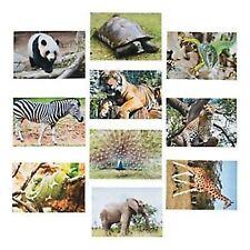 4 x WILD ANIMAL CREATURES PHOTOGRAPH IMAGE PACON NATURES ATTIRE CREATIVE PAPER