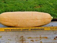 Monster Banana Squash seeds HUGE FRUIT eat all winter NON GMO HEIRLOOM VARIETY