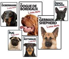 Panneaux, plaques et pancartes blancs pour chien
