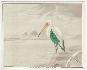 Vintage Christmas Card Ibis Bird Eyre and Spottiswoode Circa 1900
