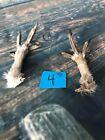 2 Real Feet Sharptail Grouse animal Witchcraft Spell Voodoo art craft mount bird