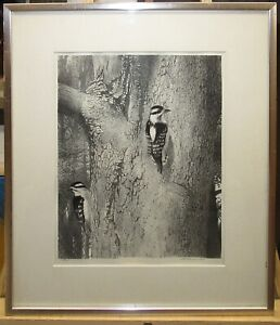 """Stow Wengenroth Rare Litho """"Spring Visitors"""" of Woodpeckers on a Tree Listed"""