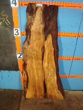 "#9224   1 1/4"" THICK  black line spalted maple live edge slab"