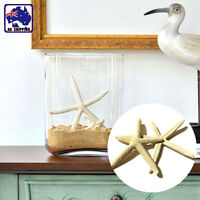 10pcs 5-10CM Fingers Starfish Sea Beach Wedding Coastal Decor Craft HDNB38800x10