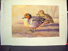 David  Plank  Original Water Color Painting.  Waterfowl   Teal