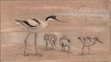 PETER PARTINGTON Signed Etching AVOCETS c1980 BIRDS WILDLIFE ARTIST