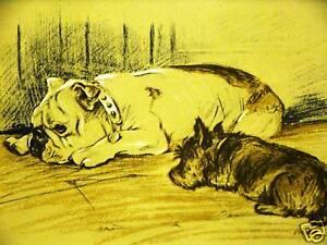 Lucy Dawson 1937 BULLDOG & CAIRN Dog Art Print Matted