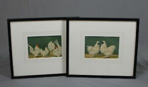 Pair of Vintage Antique Chicken Prints