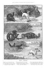 Mind V. Matter  -  Cats Fighting over Bone  - Dog Wins  -  Louis Wain  -  1889