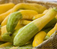 ZEPHYR Zucchini gelb / grün knackig festes Fleisch Kürbis 4 Samen SUPER SELTEN
