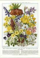 1952 Spring And Summer Flowers Which Shakespeare Loved And Cited