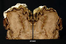 "Exquisite Petrified Wood Bookends 13 3/4"" wide 8 1/4"" tall 2 1/8"" thick 17.6 lbs"